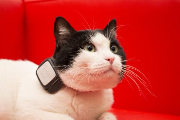 Photo of V by Vodafone lancia la nuova Promo Estate per acquistare V-Pet a rate o in unica soluzione