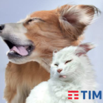 tim_caniegatti